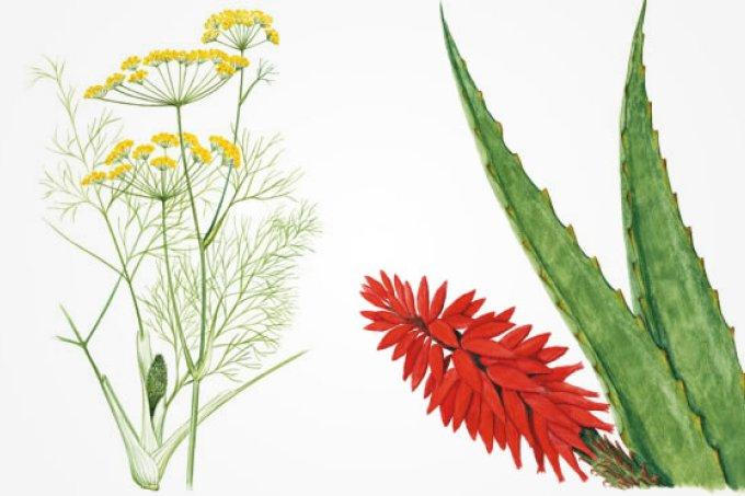 01 - plantas-medicinais-26576
