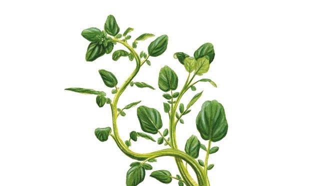 02 - plantas-medicinais-agriao